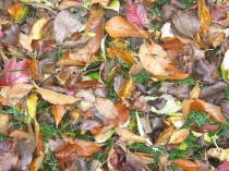 Herbst, Laub, Blätter